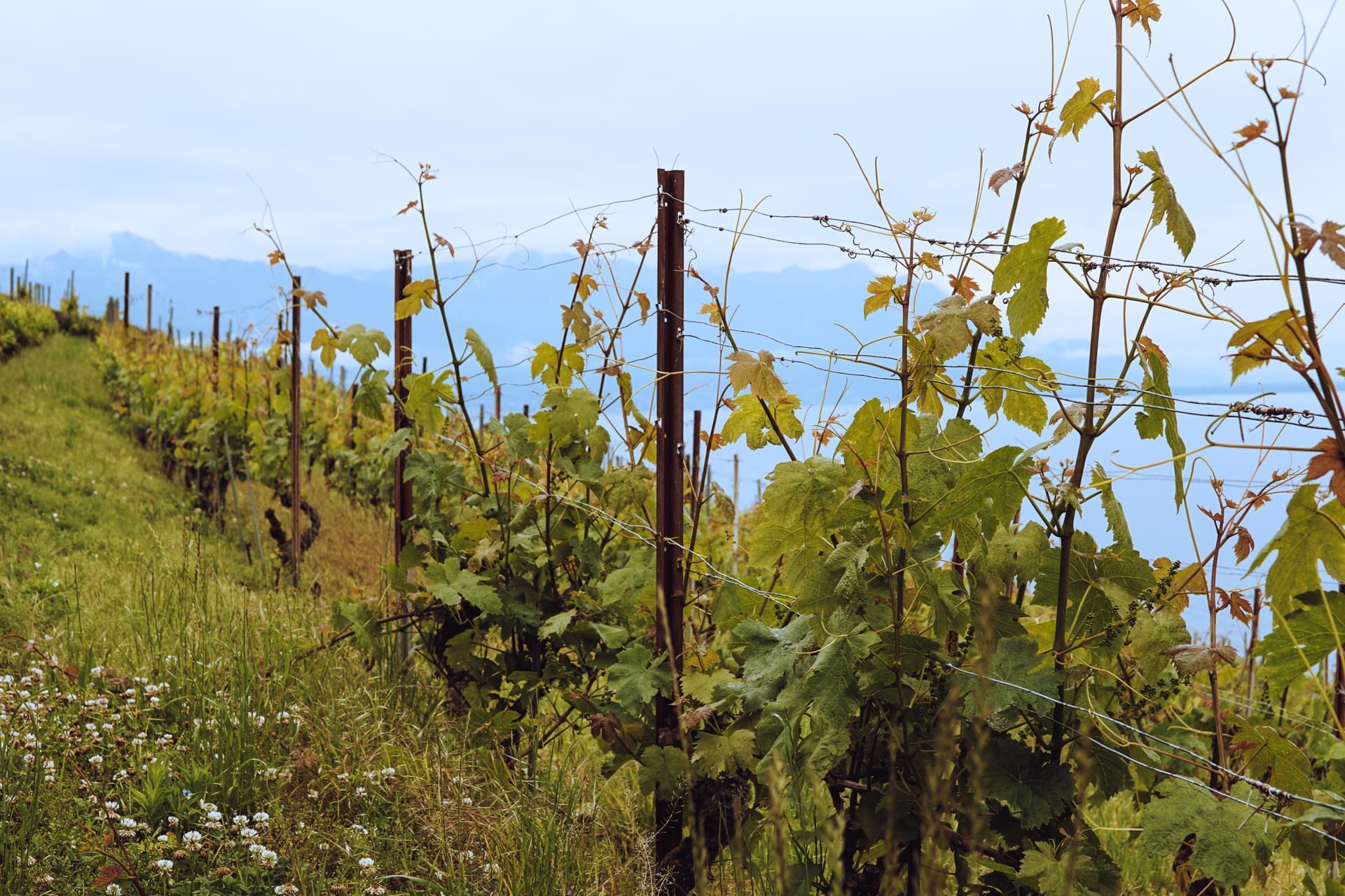 Blue Ridge Mountains Scenic Wineries